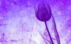 тюльпан, цветок, стебель, штрих