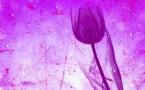 tulipán, flor, tallo, tocar