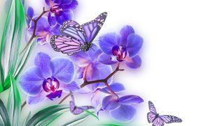 лист, цветок, природа, орхидея, бабочка, лепестки