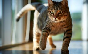 cat, COTE, Sonne, Fußboden, Zimmer