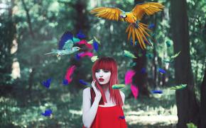 uccelli, ragazza, piumaggio, Multicolore