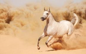 бег, лошадь, конь, пыль, песок, бежит