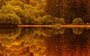 湖, 反射, 森林