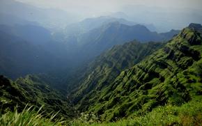 erba, uccelli, Fiori, torrente, nebbia, Montagne, canyon