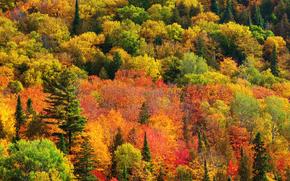 Природа, Канада, Онтарио, краски, лес, осень
