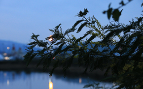 Sochi, bokeh, branch, Flowers, foliage