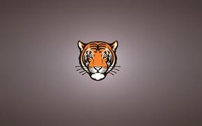 serious, minimalism, head, moustached, Snout, tiger