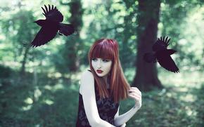 uccelli, rossa, corvi, ragazza