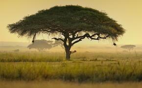 Кения, Африка