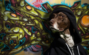 dog, hood, wall, view, graffiti