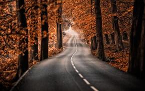 parque, carretera, bosque, naturaleza, otoño, árboles
