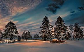 зима, снег, сумерки, ели, парк