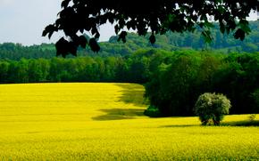 листья, ветка, лес, поле