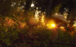 грибы, лучи, солнце, трава