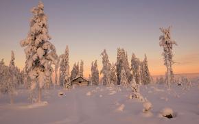 зима, снег, домик, ели, деревья