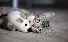 gioco, gattino, topo