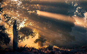 forest, sun, trees
