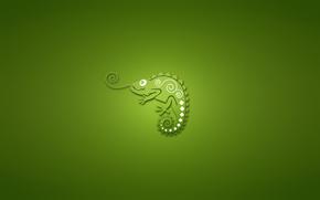 chameleon, green background, minimalism