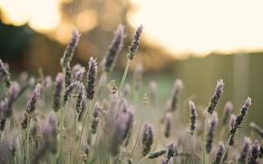 фон, полноэкранные, лепестки, цветок, макро, обои, цветочек, цветы, розовый, растение, поле, широкоформатные, цветочки, широкоэкранные
