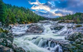 rivière, Rocks, noyaux, arbres, paysage