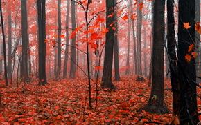 autunno, natura, foresta