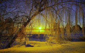 natura, salire, paesaggio, inverno, nevicata, sole, cielo, alberi