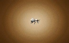 fine, bee, orange background, bee, minimalism