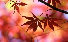trees, Widescreen, wallpaper, tree, leaves, foliage, fullscreen, leaves, Macro, Widescreen, red, background, degradation