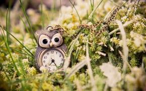 подвеска, зеленая, сова, макро, часы, трава, кулон