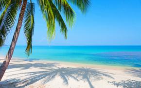 cielo blu, sabbia, paesaggio, spiaggia, mare, palma, riflessione