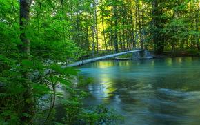 fiume, foresta, ponte, estate, natura, foto