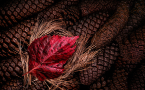 шишки, красный, лист