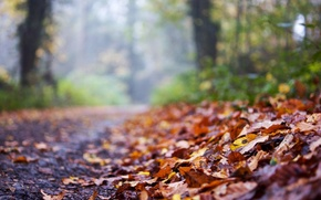 leaves, Widescreen, Widescreen, background, Macro, foliage, wallpaper, autumn, degradation, road, fullscreen