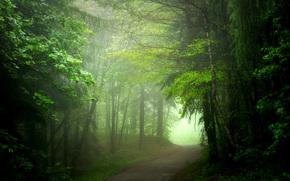route, forêt, brouillard, été