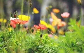 background, fullscreen, flowers, wallpaper, Flowers, Widescreen, flower, Macro, Widescreen, yellow, leaves, foliage, red