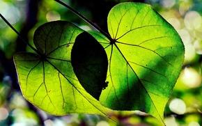 Macro, trees, form, leaves, Widescreen, wallpaper, foliage, background, Widescreen, fullscreen, Green