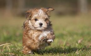 собака, щенок, трава