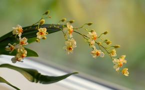 ветка, орхидея, желтые, фон, цветы
