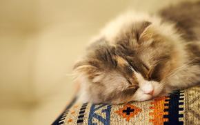 posti letto, gatto, Peloso, museruola, sfondo, sogno