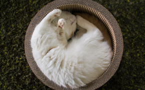 dream, basket, cat, sleeps