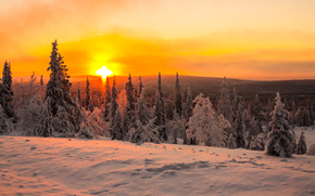 拉普兰日落, 冬天, 树, 景观