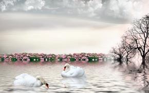 лебеди, 3d, art