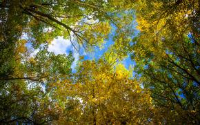 крона, листья, деревья, небо, осень