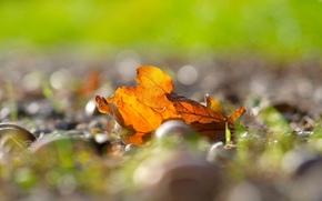 Macro, autumn, degradation, fullscreen, wallpaper, leaves, Widescreen, background, foliage, bokeh, yellow, leaflet, Widescreen