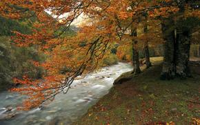 река, осень, лес, горы