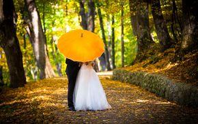смокинг, новобрачные, настроения, полноэкранные, костюм, деревья, зонтик, невеста, жених, любовь, парень, свадебное платье, тропинка, женщина, осень, мужчина, широкоэкранные, девушка, зонт, аллея, свадьба, обои, желтый, широкоформат