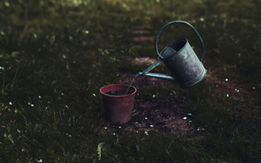 sprout, tree, Art, watering can, watering