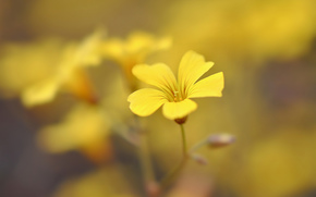 background, degradation, flowers, wallpaper, fullscreen, floret, Petals, Widescreen, Widescreen, yellow