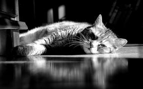 riposo, strisce, COTE, gatto, bugie