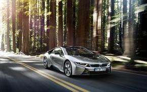 BMW, forest, Car, BMW, in motion